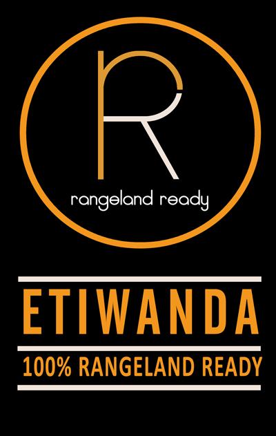 etiwanda white dorpers